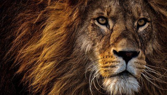 Die besten Deals aus die Höhle der Löwen